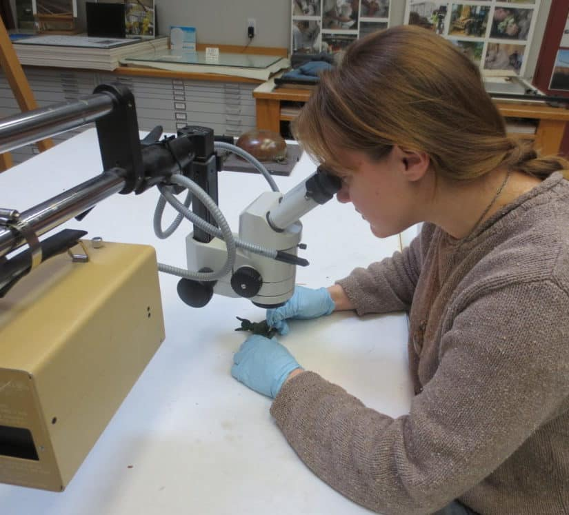 Christina L. Simms Objects Conservator